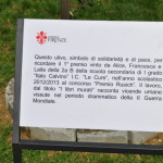 """La targa che ricorda la """"storia"""" dell'olivo."""