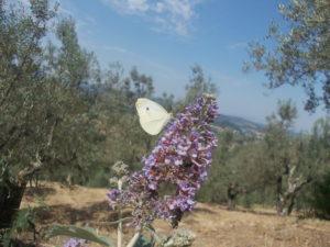 giulia torrini